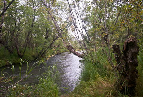 Alaska Trout Fishing Pictures-4