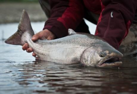 Favorite King Salmon Rod