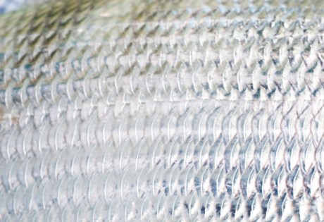 Bonefish Scales by Louis Cahill Photography