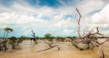 Mangrove Shuffle by Louis Cahill Photography