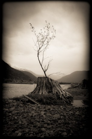 Dean Tree Stump by Louis Cahill Photography
