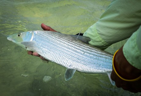 Bonefish Tagging