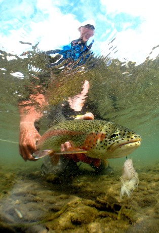 underwater trout on flesh at Alaska West