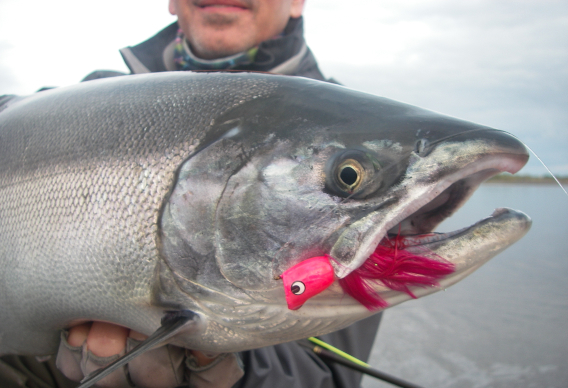 Fly Fishing for Silver Salmon with Poppers