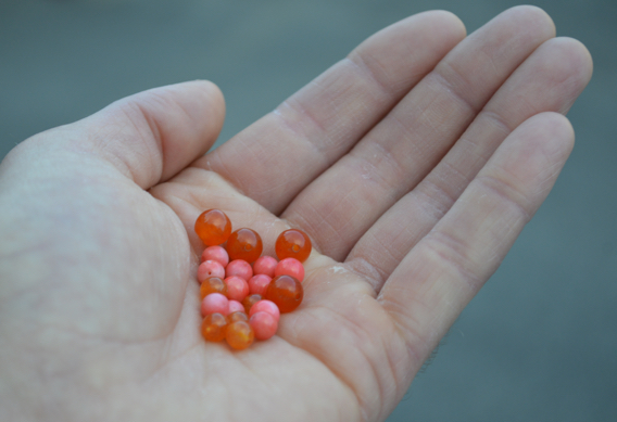 Weighted beads for trout.