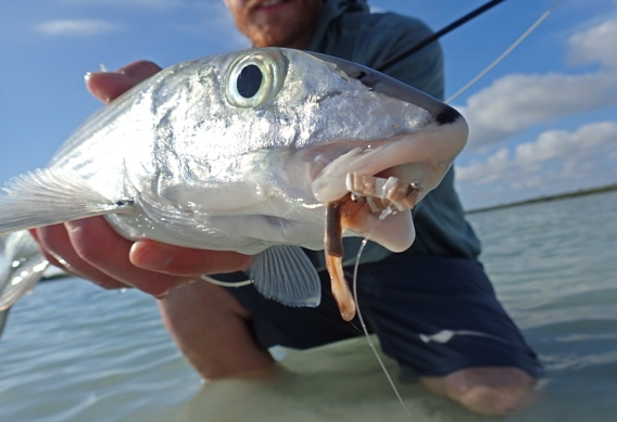 Catching bonefish on dry flies with Kyle Shea.