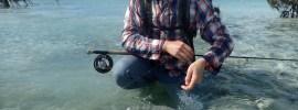 Releasing bonefish on the flats.