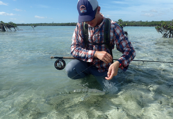 Releasing bonefish on the flats.