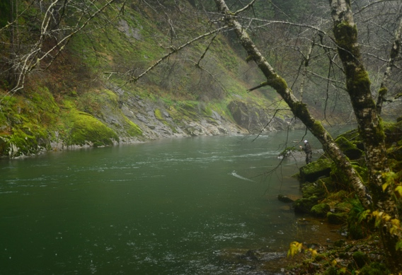 Fly fishing for steelhead by Nick Chambers.