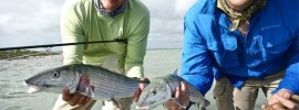 Double bonefish at Andros South.