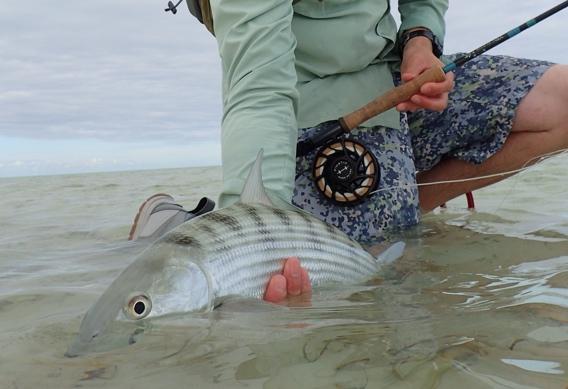 G loomis NRX Saltwater for bonefish