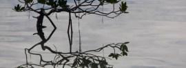 mangrove by Peter Viau