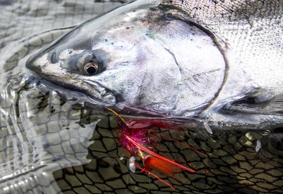 Greg Houska's kriller fly pattern for steelhead and salmon