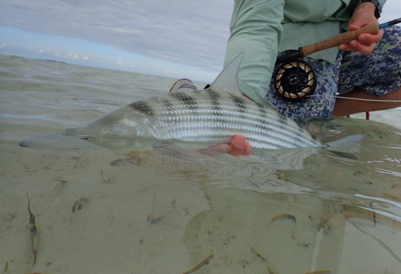 Bonefish in the Bahamas