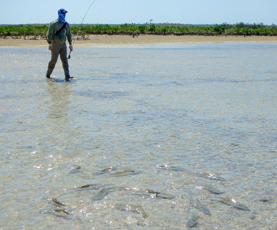 Tailing bonefish in shallow water