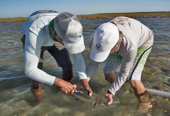 bahamas bonefish conservatio