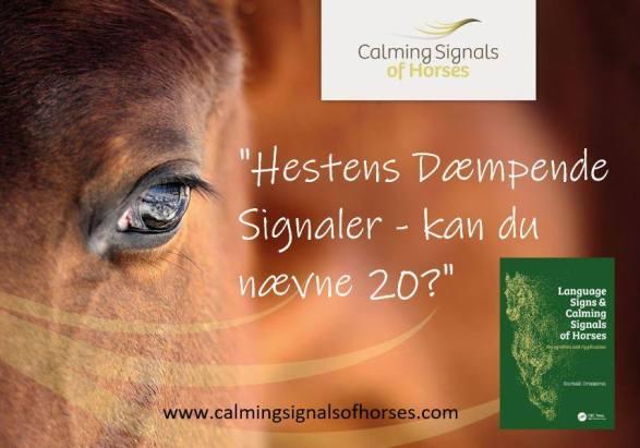 Calming Signals Of Horses