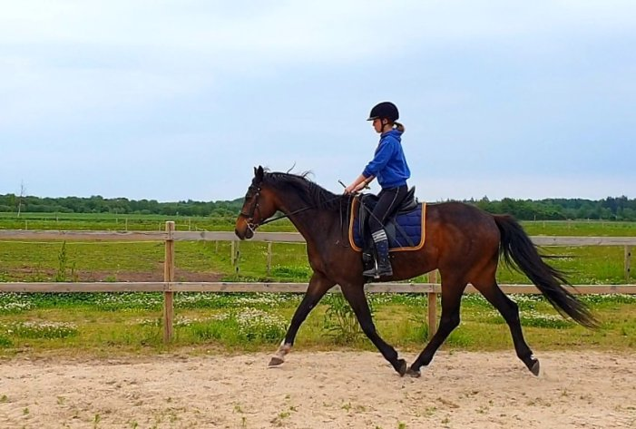 Den Hele Ekvipage Rideskole