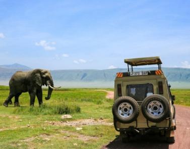 Mynyara-Safari