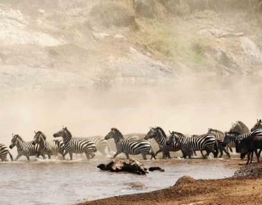 Nakuru-Safari