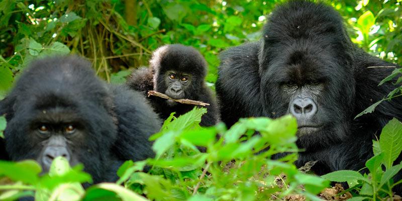 Uganda-wildlife-safari-&-primate-safari