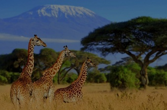 discover-africa