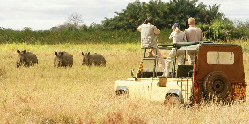 Safari in Kenya and Uganda