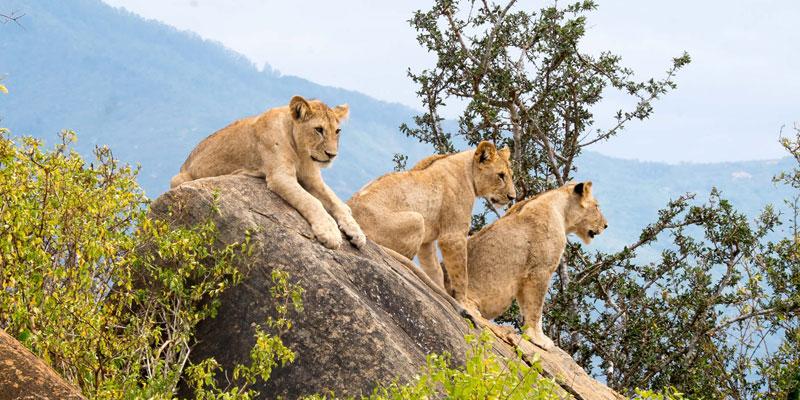Kenya 7 days safari nakuru-amboseli-tsavo-west-east-national-parks