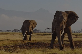 tailored-safaris