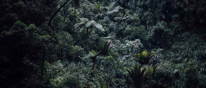 Leaving it All Behind: Living in the Jungle with Nothing