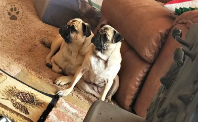 Snapshot Sundays February-Odor and Millie Herl