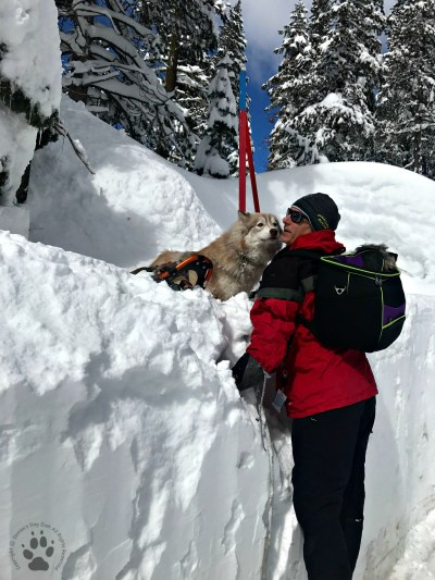 Snapshot Sundays February-Snowshoeing Shasta, Zara and Denton 1
