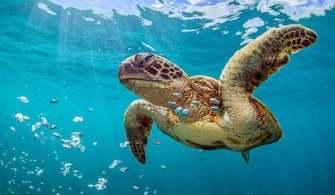 Kaplumbağadan 816 KG Uyuşturucu Kaçakçılığı