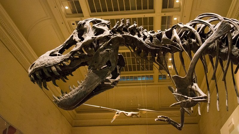 Smithsonian2