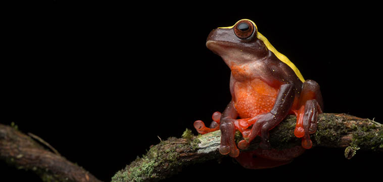 Ecuador 2016 –  Herps and Hummingbirds