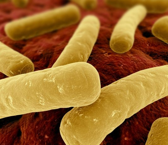 Clostridia