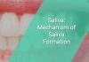 Saliva: Mechanism of Saliva Formation