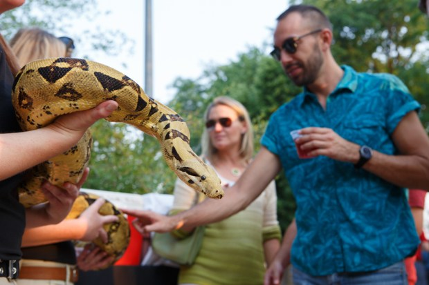 """""""Rosa,"""" a male boa constrictor, is greeted by Frankie O'Donnell, right."""