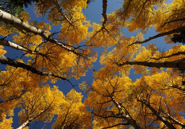 Fall is here and the golden leaves work their way down to lower elevations, Thursday, September 29, 2011, at Rocky Mountain National Park. RJ Sangosti, The Denver Post (Photo By RJ Sangosti/The Denver Post via Getty Images)