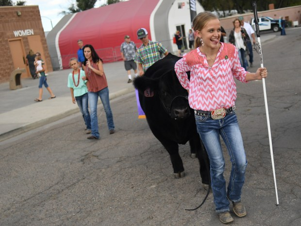 Julia Frye, 15, of Wellington, brings her grand campion steer back to its pin after the Jr. Livestock Sale at the Colorado State Fair in Pueblo, August 30, 2016. The steer sold for $62,000.