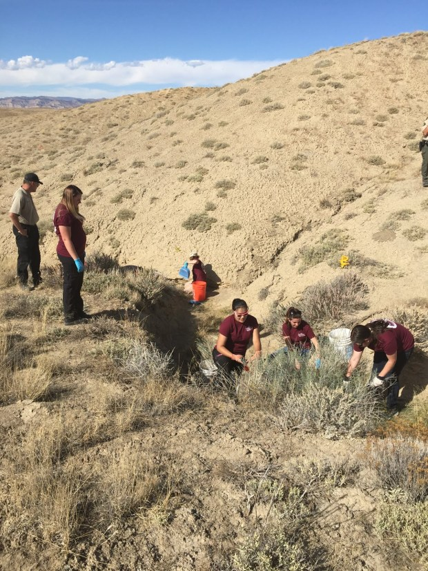 CMU Forensic Investigative Research Station members work to uncover remains in cooperation with the Mesa County Sheriff's Office.