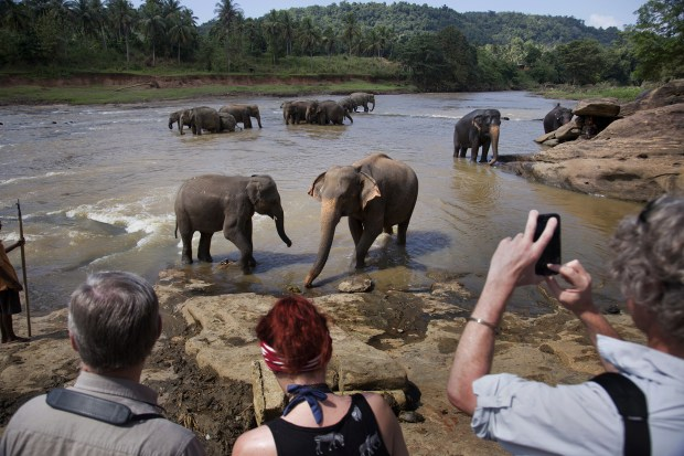 Visitors photograph elephants in the river at the Pinnawala Elephant Orphanage, established by the Sri Lanka Department of Wildlife Conservation, in Pinnawala village, Sabaragamuwa province, Sri Lanka, on Dec. 30, 2015.