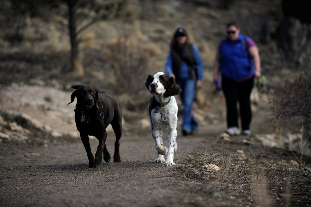 Dogs walk at Elk Meadow Dog Park in Evergreen