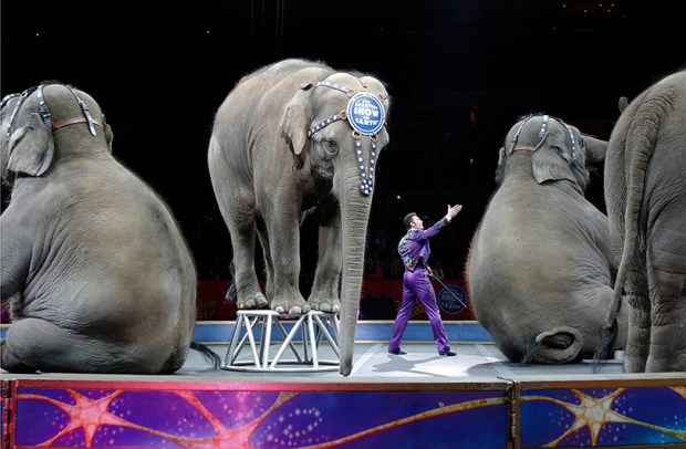 """Asian elephants perform for the final time in the Ringling Bros. and Barnum & Bailey Circus in Providence, R.I., on May 1, 2016. The circus will end """"The Greatest Show on Earth"""" in May 2017, following a 146-year run."""