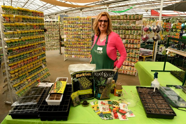 Tagawa Gardens' Garden Advisor Linda Larsen shows the assortment of items needed to begin the process of cultivating seeds for your summer garden at Tagawa Gardens on February 6, 2017 in Centennial, Colorado. From left to right are an assortment of trays for planting, different kinds of soils with which to plant, different types of seeds, and plastic coverings to create a humid environment once the seeds are planted. Larsen, who is also a master gardener and bee keeper, goes through a step by step process on how to begin the process of cultivating seeds to plants for your summer garden.