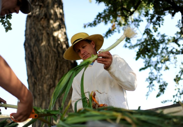 Jamie Dunston, left, and are trimming the summer leeks at Hobbs Farm in Avondale on Friday. Hobbs runs a family farm in Avondale that ships produce directly to consumers stores and restaurants, and grows seeds for farmers.