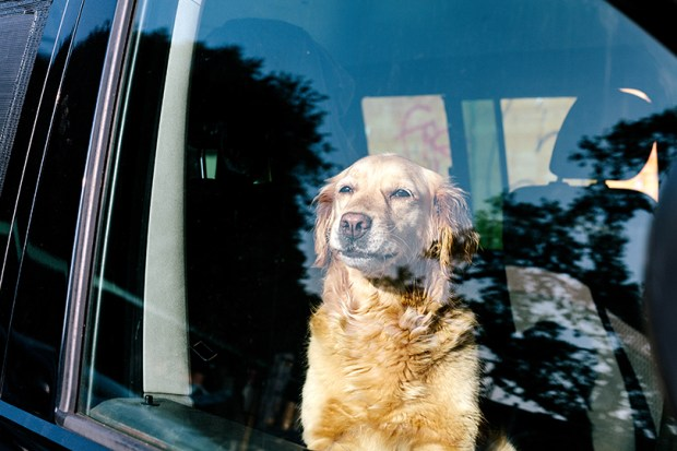 Colorado House Bill would provide legal immunity for a person who forcibly enters a locked vehicle to save an at-risk person or animal.