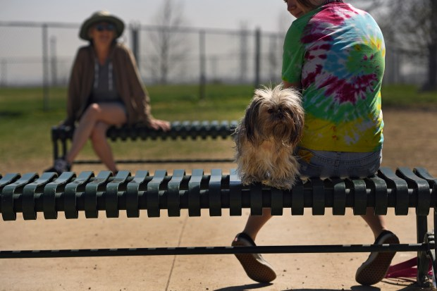 Amelia, a Shih Tzu and Pekingese mix, who is a little afraid of the dog park, stays close to owner BillieJean Meggit, right, at Homer's Run off-leash dog park on April 13, 2017 in Golden, Colorado. The park is small but it is a part of the Ulysses Sports Complex which includes baseball fields, parks for children and a skate park.