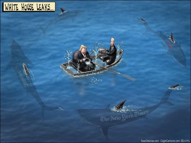 newsletter-2017-05-22-sharks-circling-cartoon-beeler