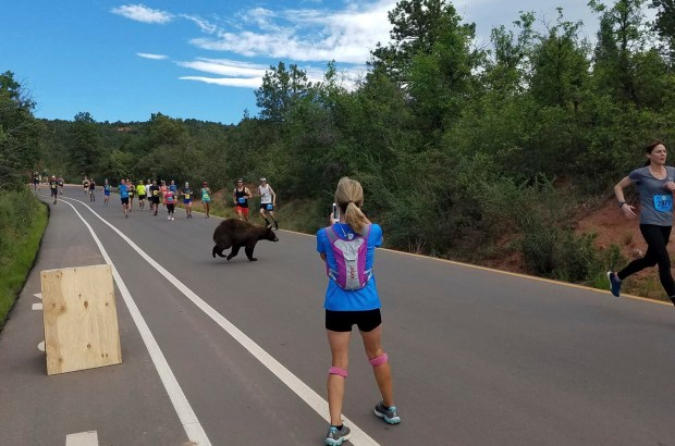 In this photo provided by Donald Sanborn, a bear walks across the road as runners compete in the Garden of the Gods 10 Mile Run near Colorado Springs, Colo., Sunday, June 11, 2017. Sanborn says the animal seemed to be trying to decide whether to zip across the road filled with runners when a large enough gap finally emerged for the bear to get through.